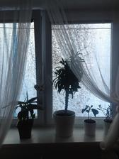 moja docasna dekoracia za oknom 😛