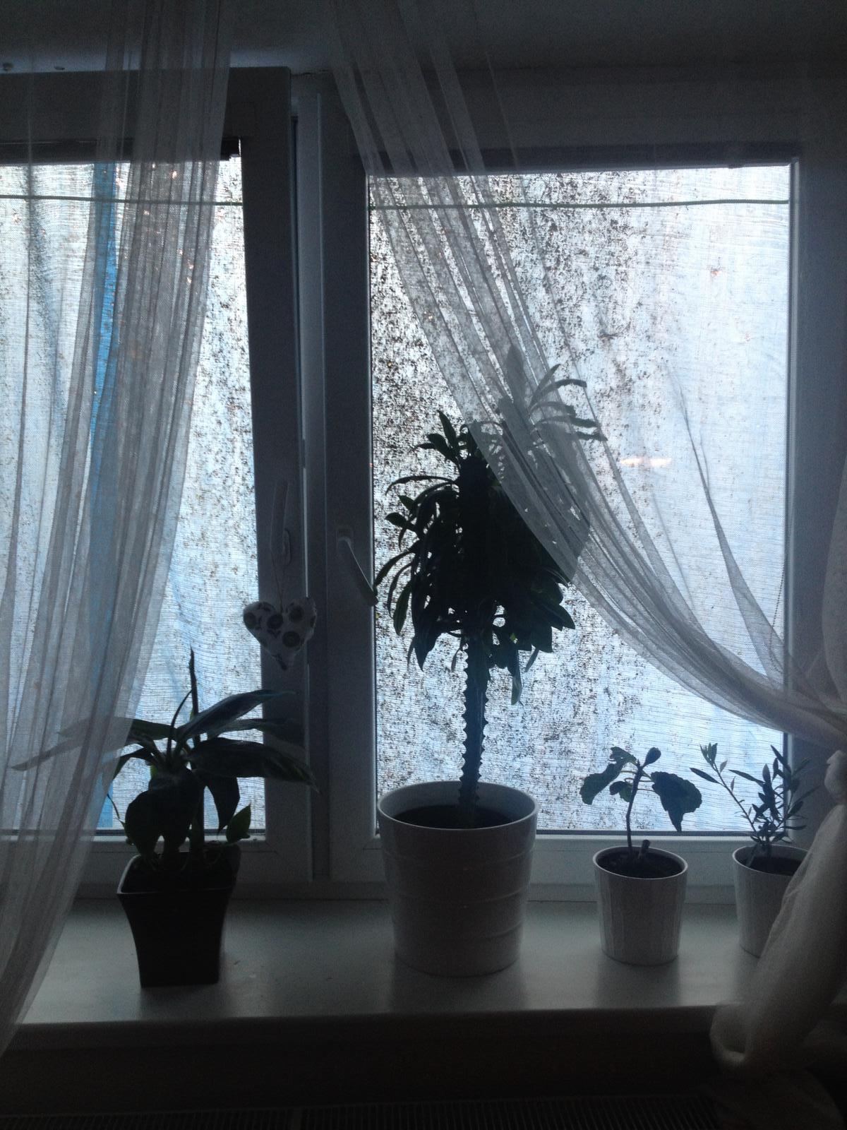 Štrúdľa po liptácky - moja docasna dekoracia za oknom 😛