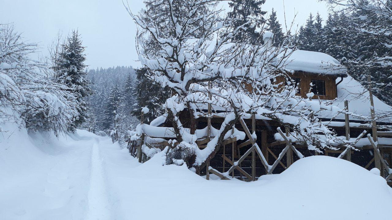 Na samote u lesa - Obrázok č. 27
