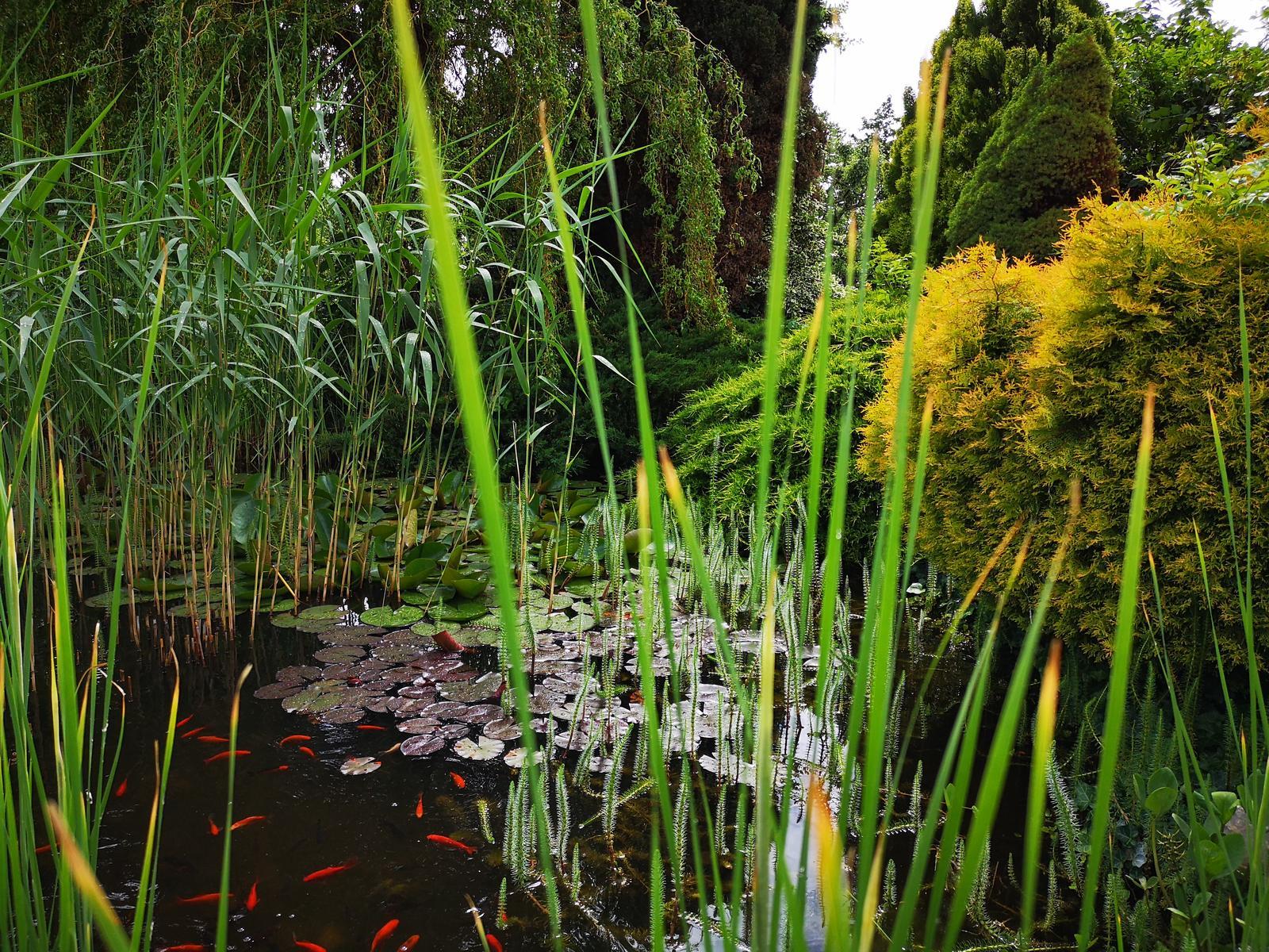 Záhrada - Obrázok č. 3