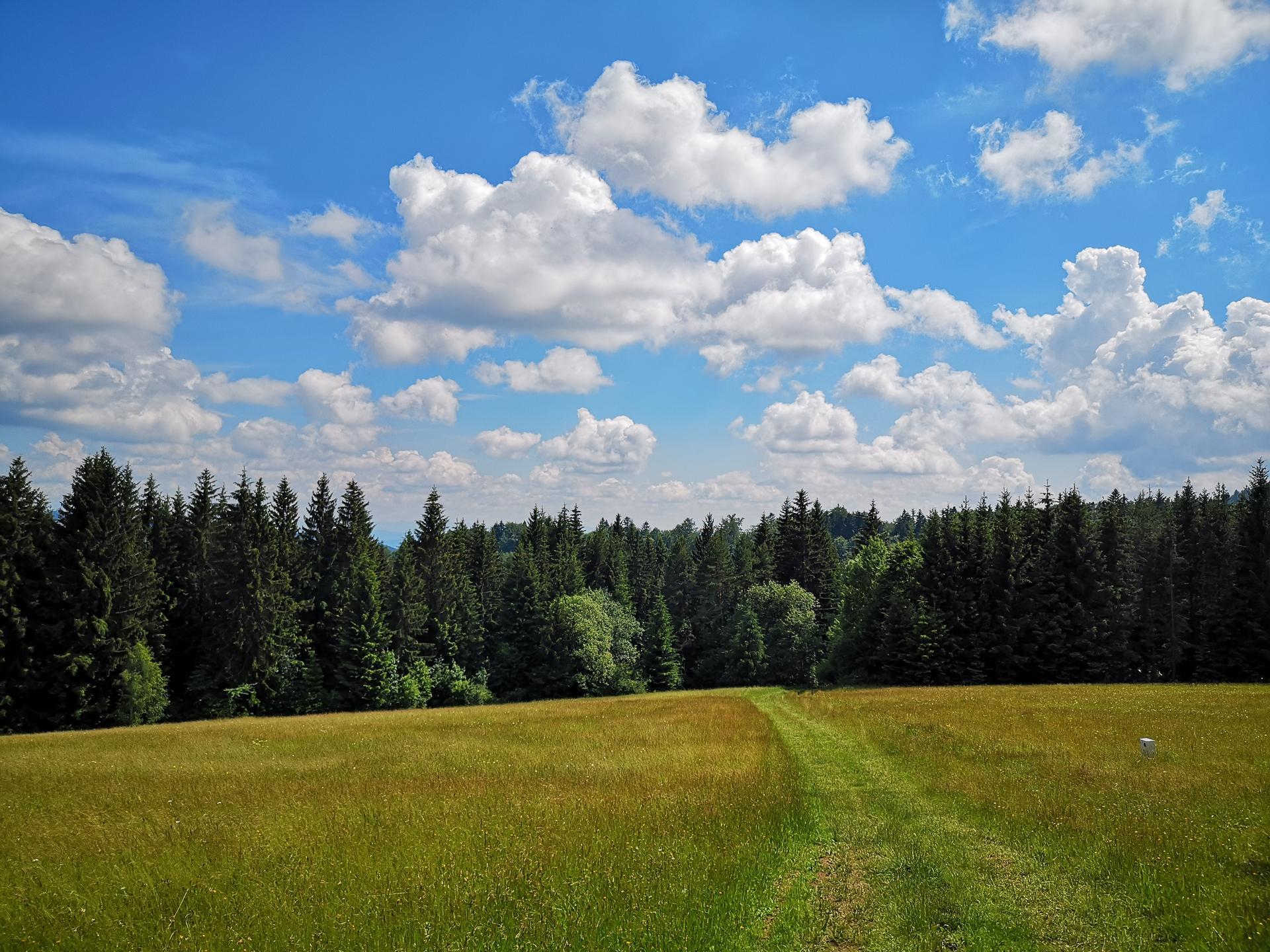 Na samote u lesa - Obrázok č. 168