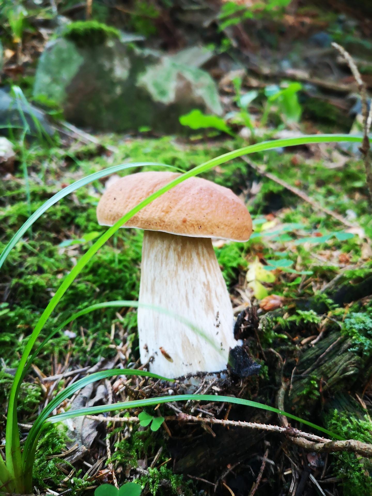 Na samote u lesa - Obrázok č. 172