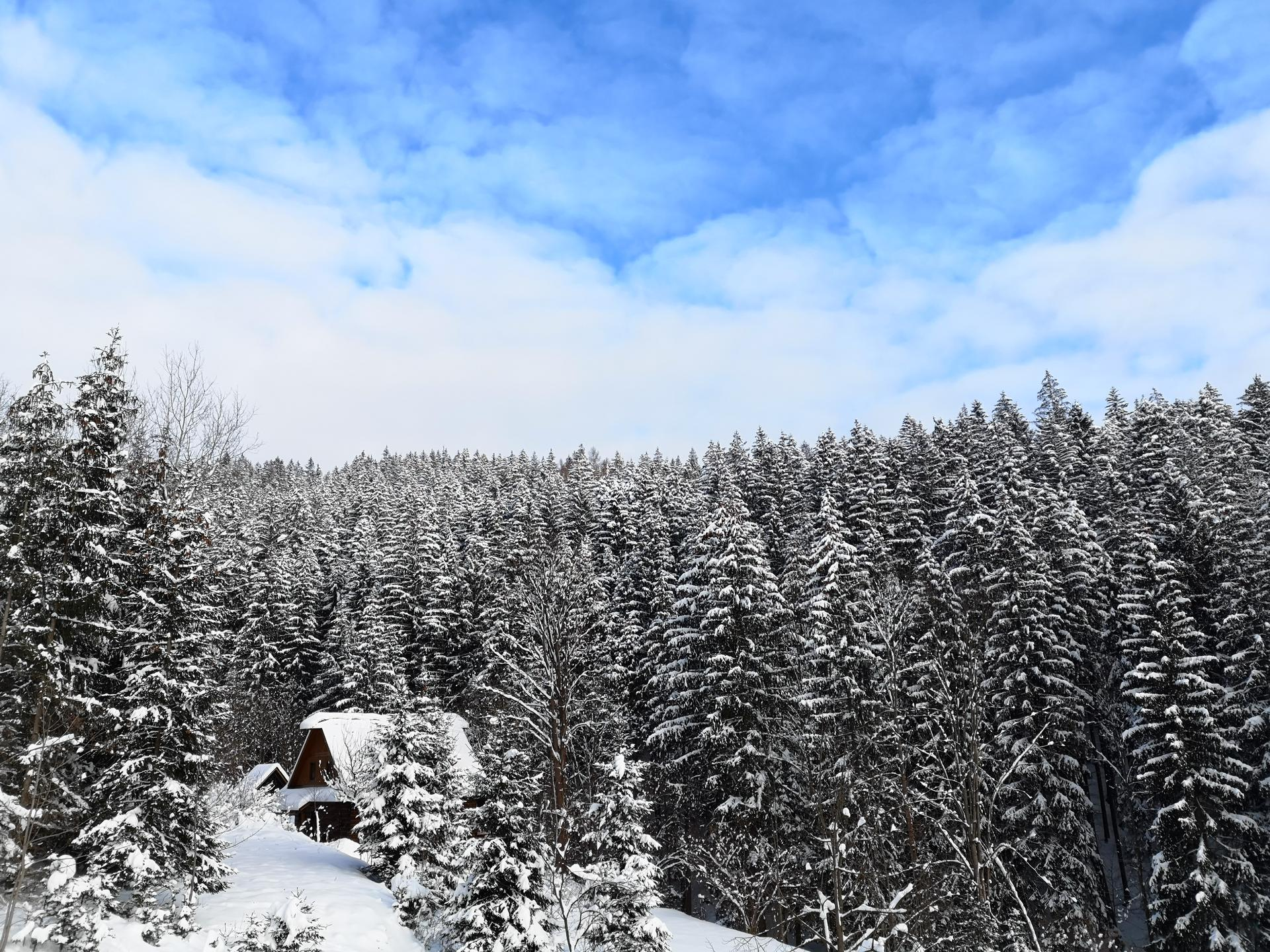 Na samote u lesa - Obrázok č. 181