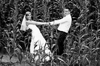 novomanželé v kukuřici