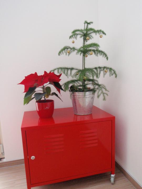 Vánoční:-) - v obýváku červená hvězda