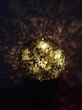 Osvícený buxus :-)
