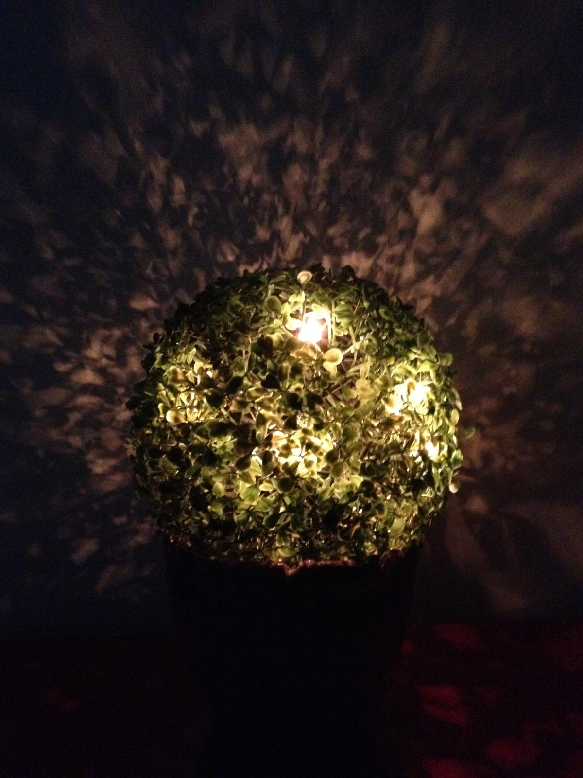 Vánoční:-) - Osvícený buxus :-)