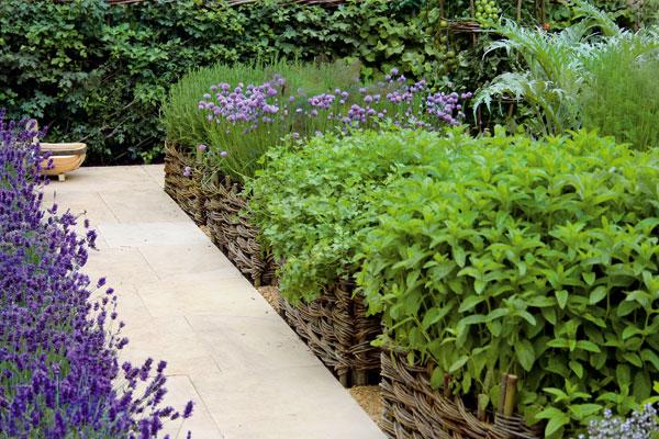 Zahrada - Chtěla bych levandulový záhon a bylinkovou zahrádku.