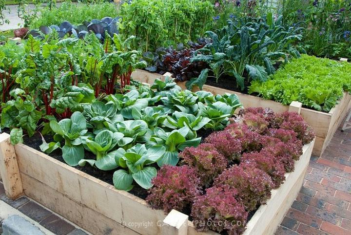 Zeleninová záhrada... - Obrázok č. 14