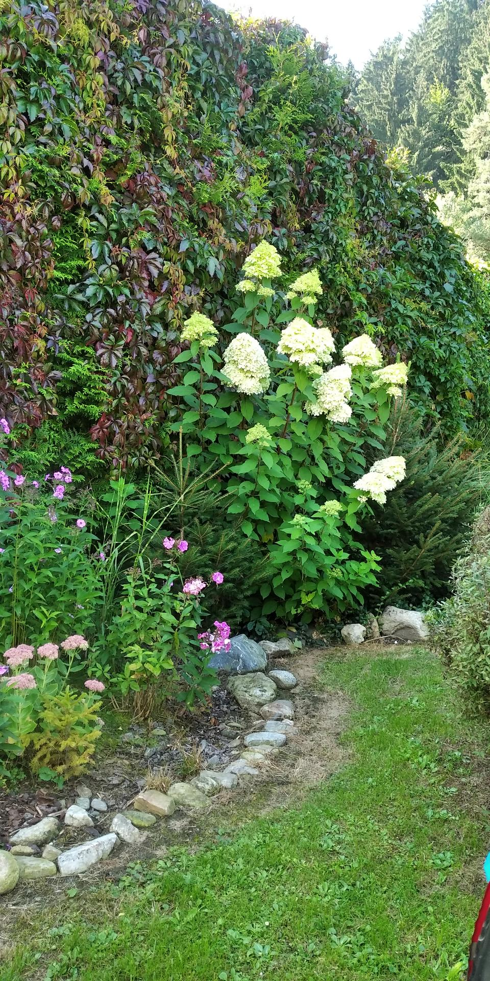 Zahrada - Obrázek č. 6