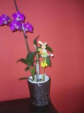 obal na kvetináč z papiera