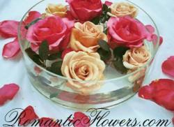 14.7.2006 - růže prostě miluju
