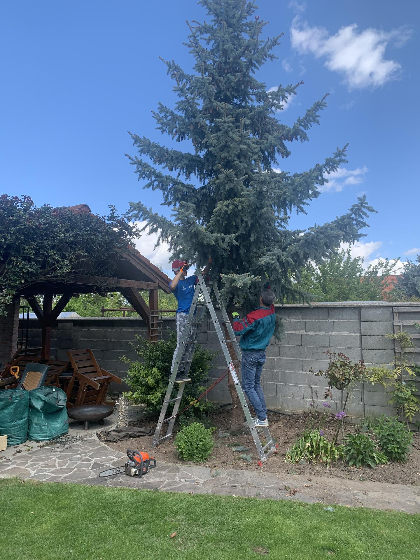 (staro) nová záhrada - Obrázok č. 4