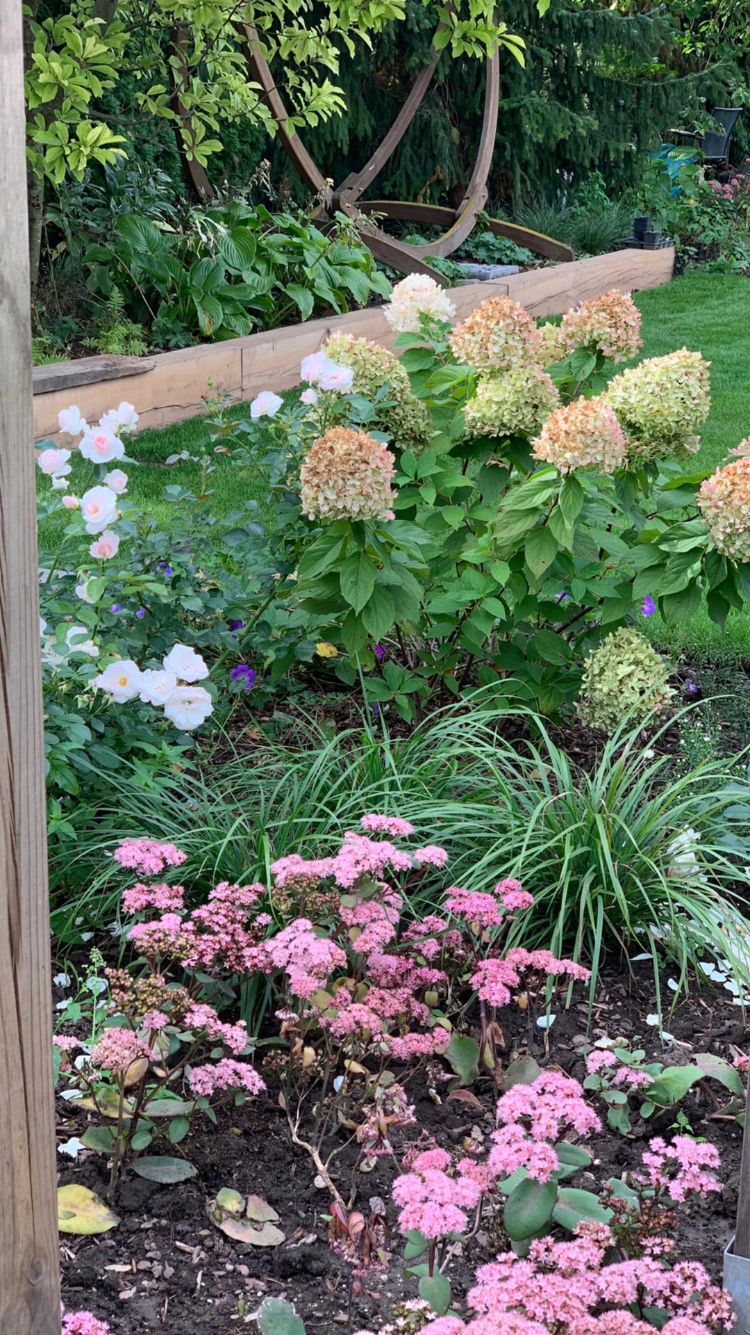 (staro) nová záhrada - Obrázok č. 75