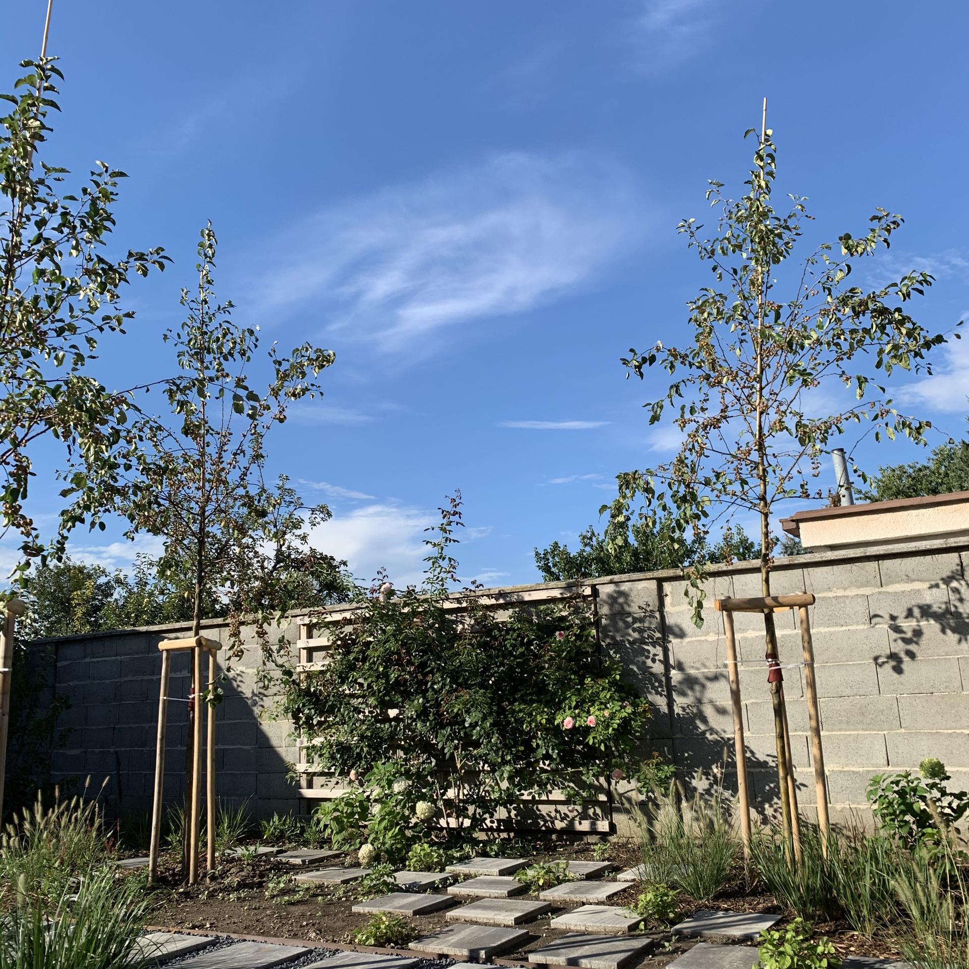 (staro) nová záhrada - Obrázok č. 71