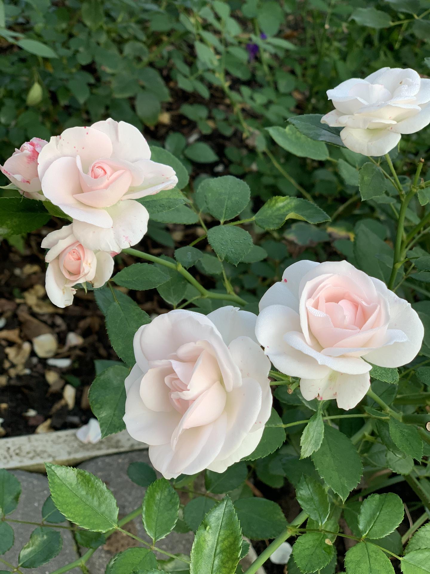 (staro) nová záhrada - Obrázok č. 78