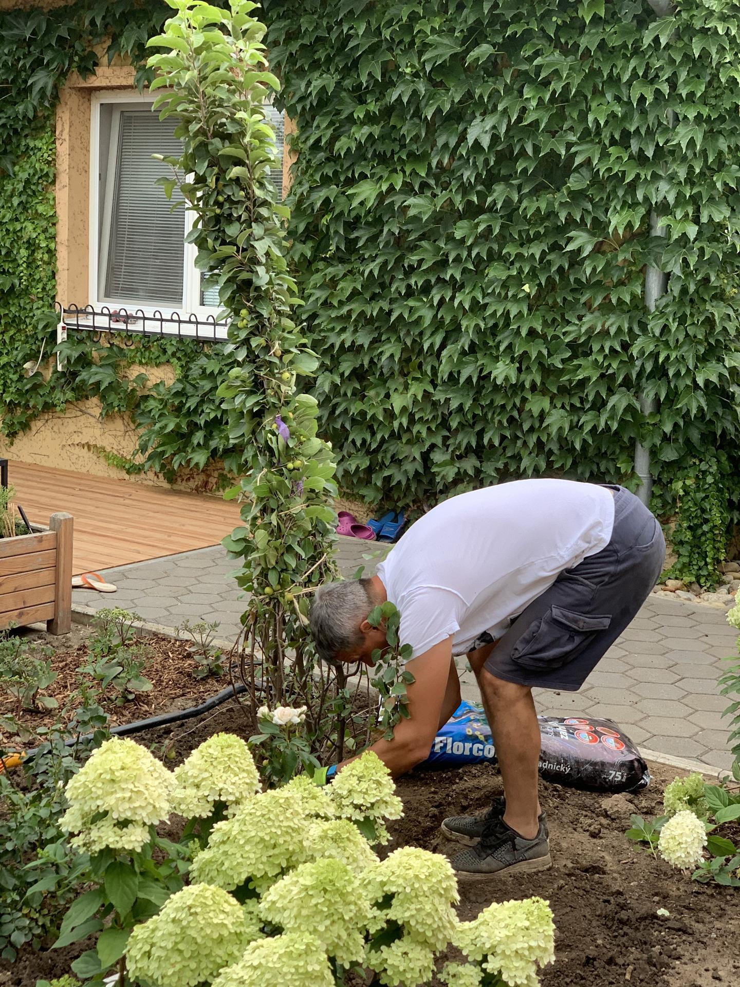 (staro) nová záhrada - Obrázok č. 58
