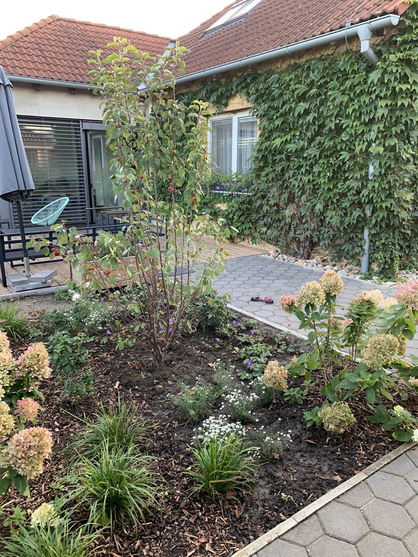(staro) nová záhrada - Obrázok č. 76