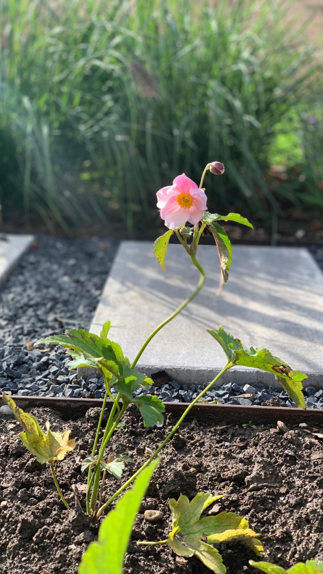 (staro) nová záhrada - Obrázok č. 89
