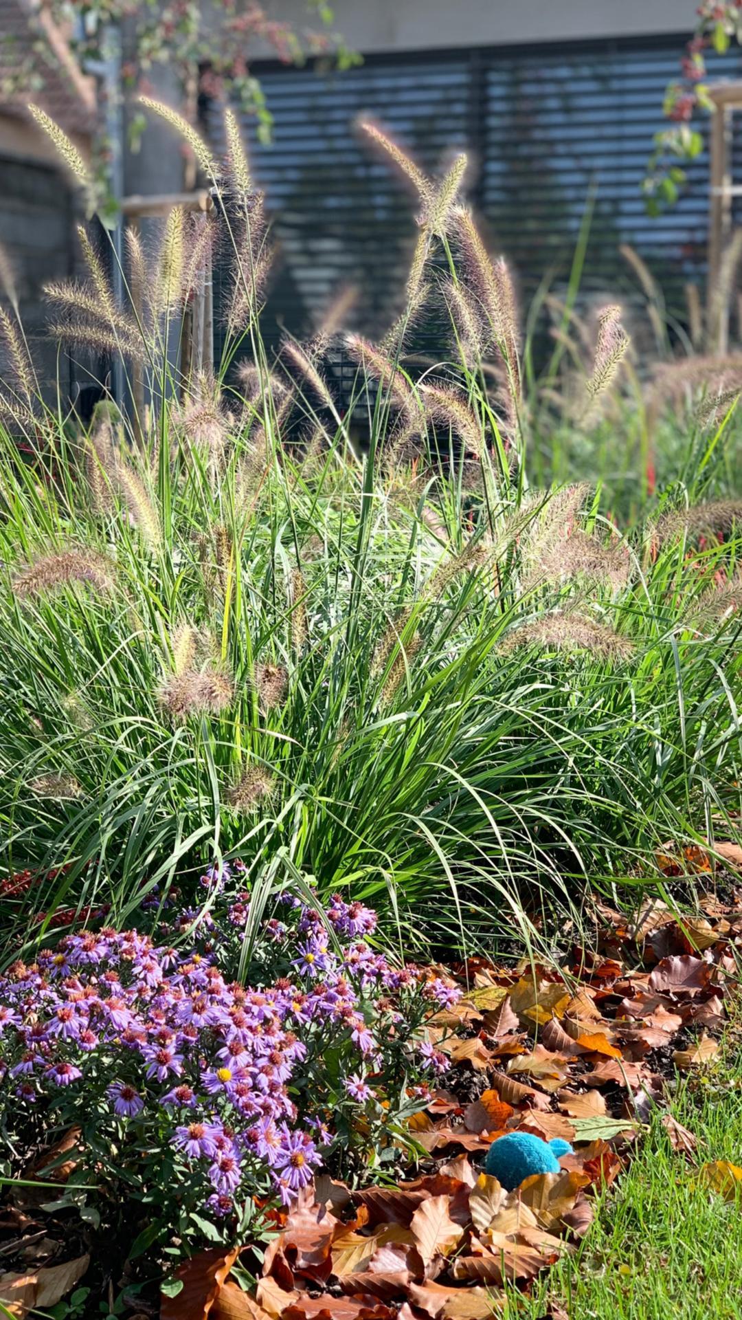(staro) nová záhrada - Obrázok č. 94