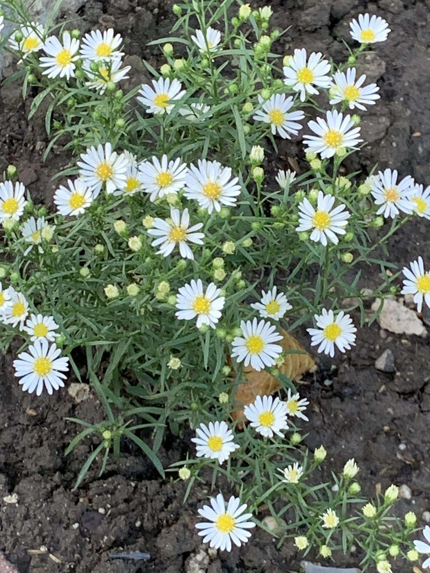 (staro) nová záhrada - Obrázok č. 83