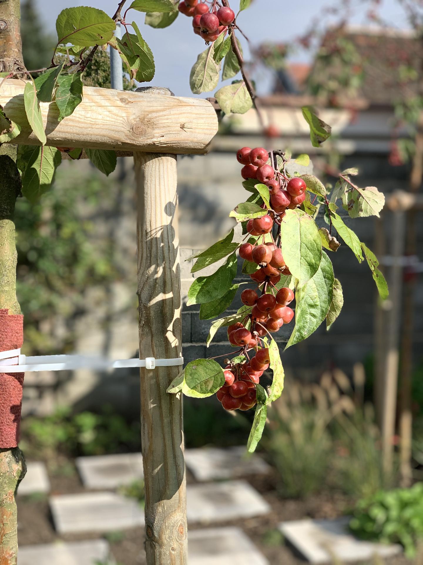 (staro) nová záhrada - Obrázok č. 96