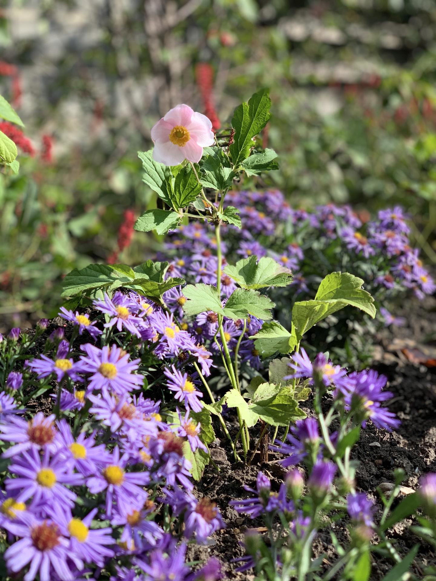 (staro) nová záhrada - Obrázok č. 92