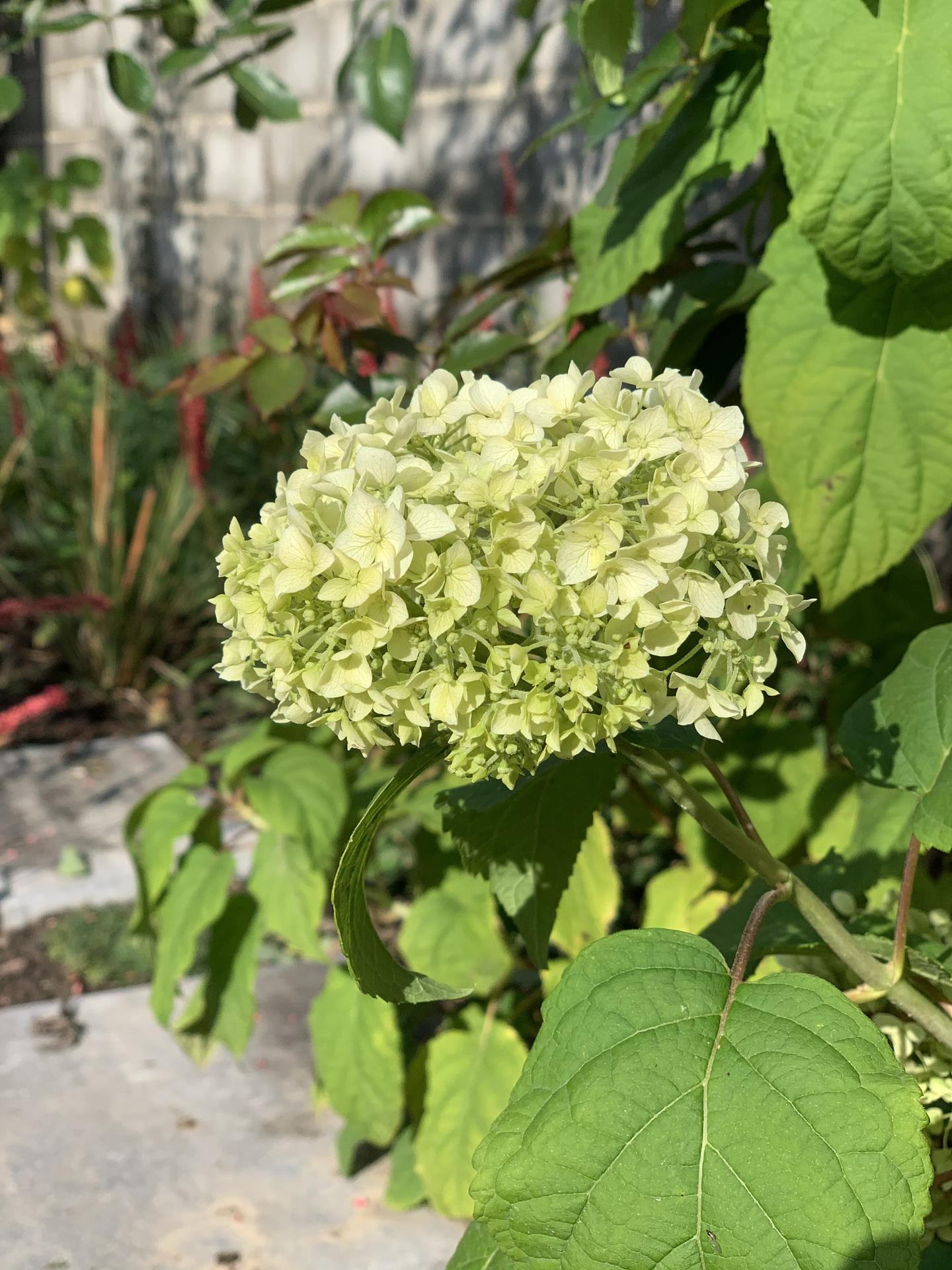 (staro) nová záhrada - Obrázok č. 91