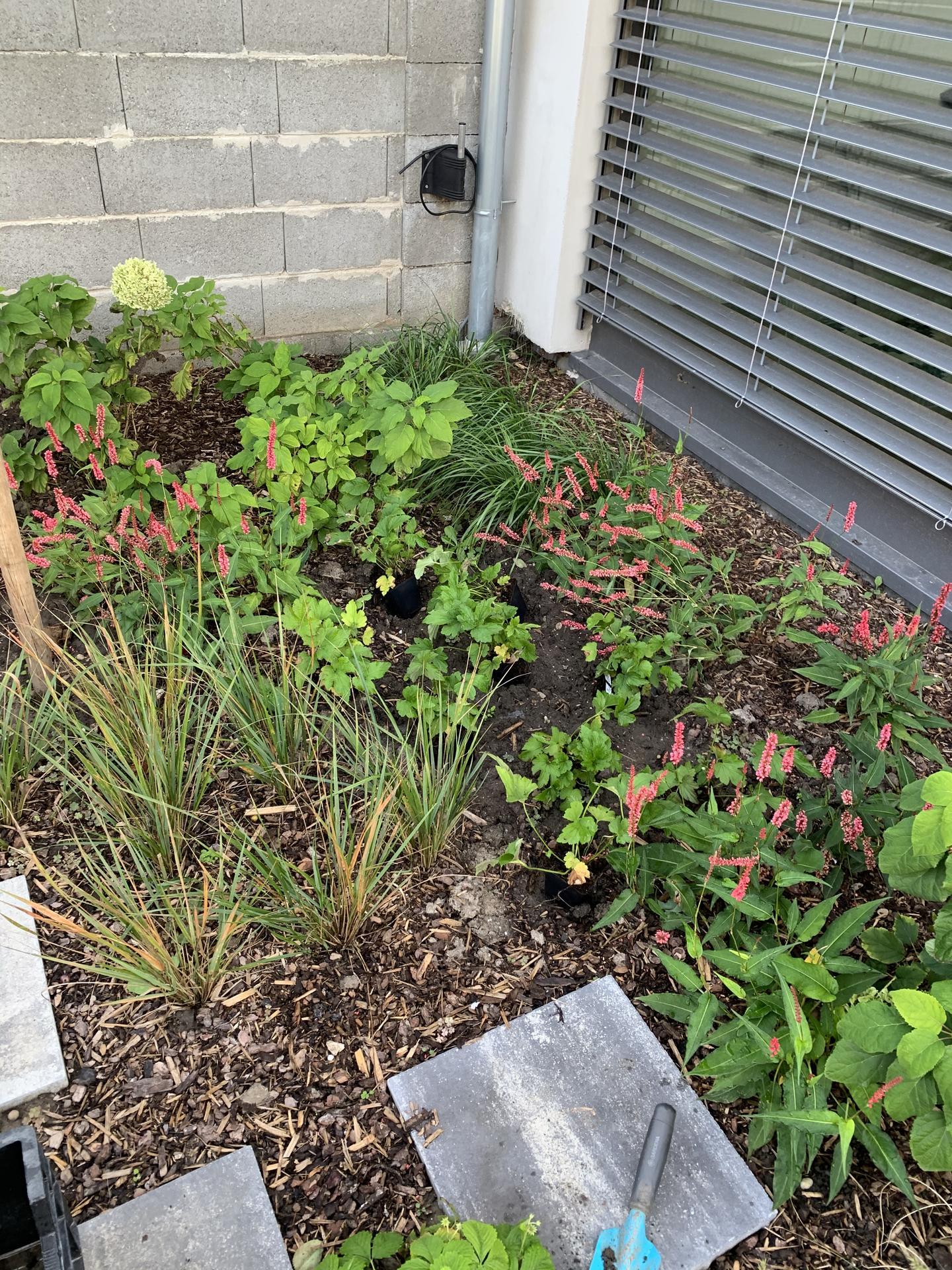 (staro) nová záhrada - Obrázok č. 87