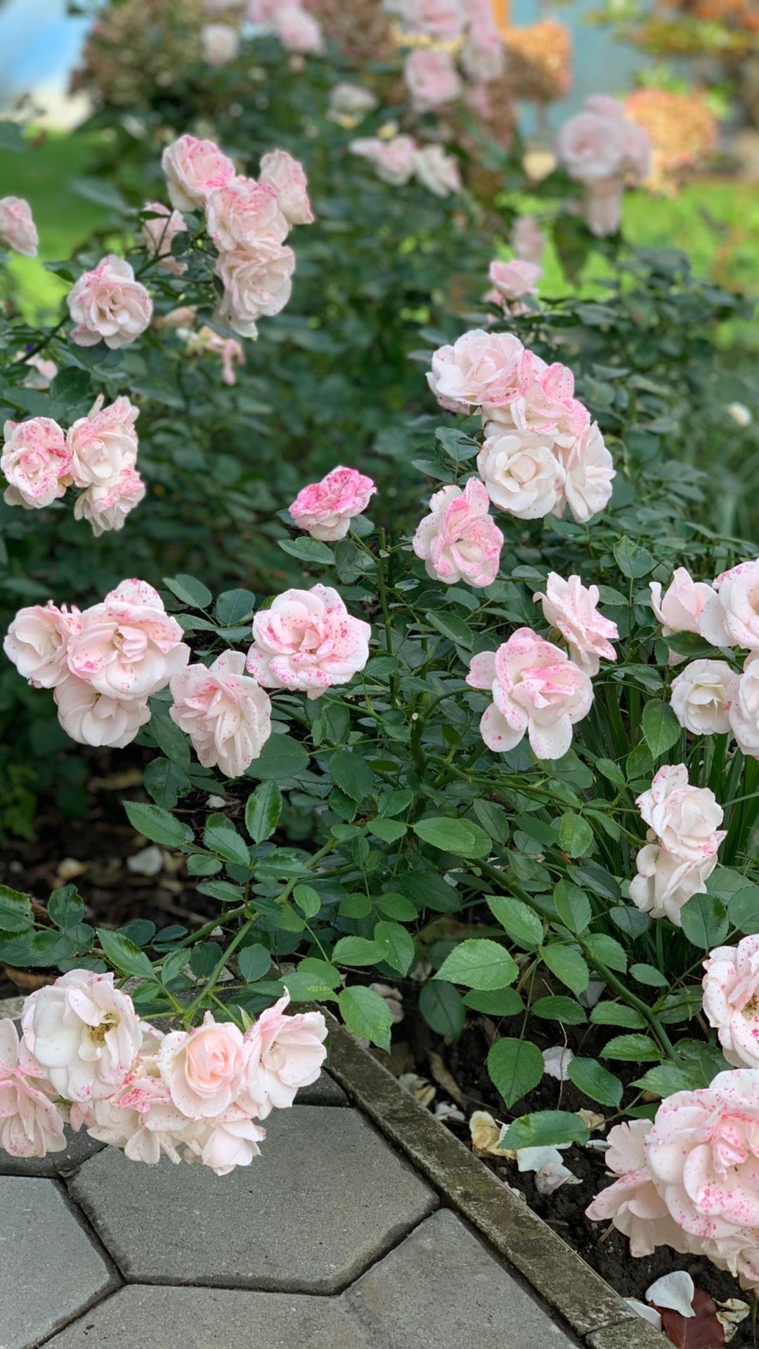 (staro) nová záhrada - Obrázok č. 98
