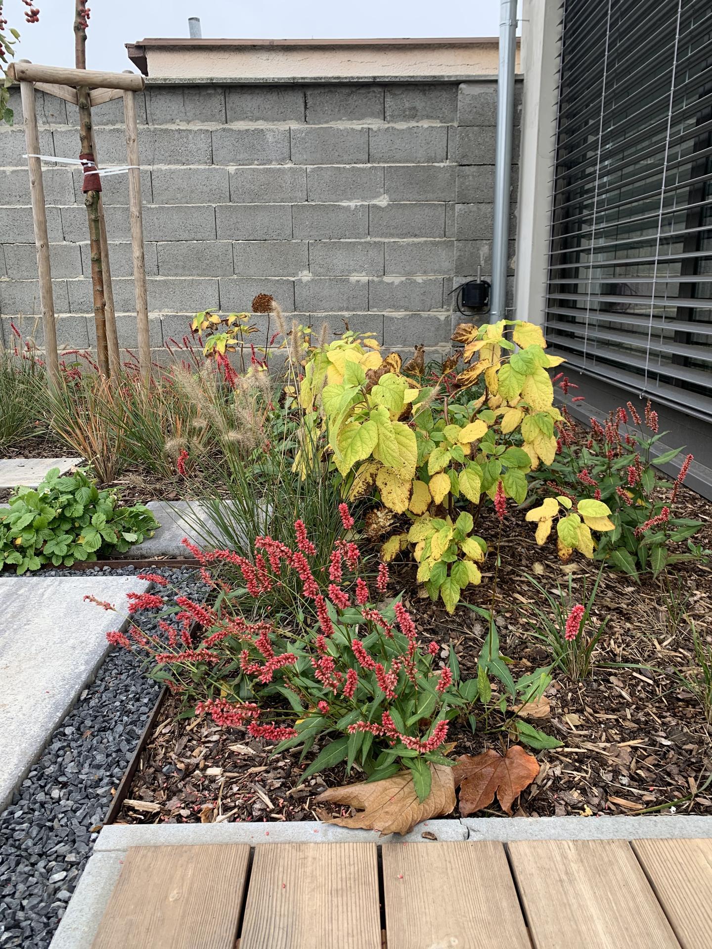 (staro) nová záhrada - Obrázok č. 106