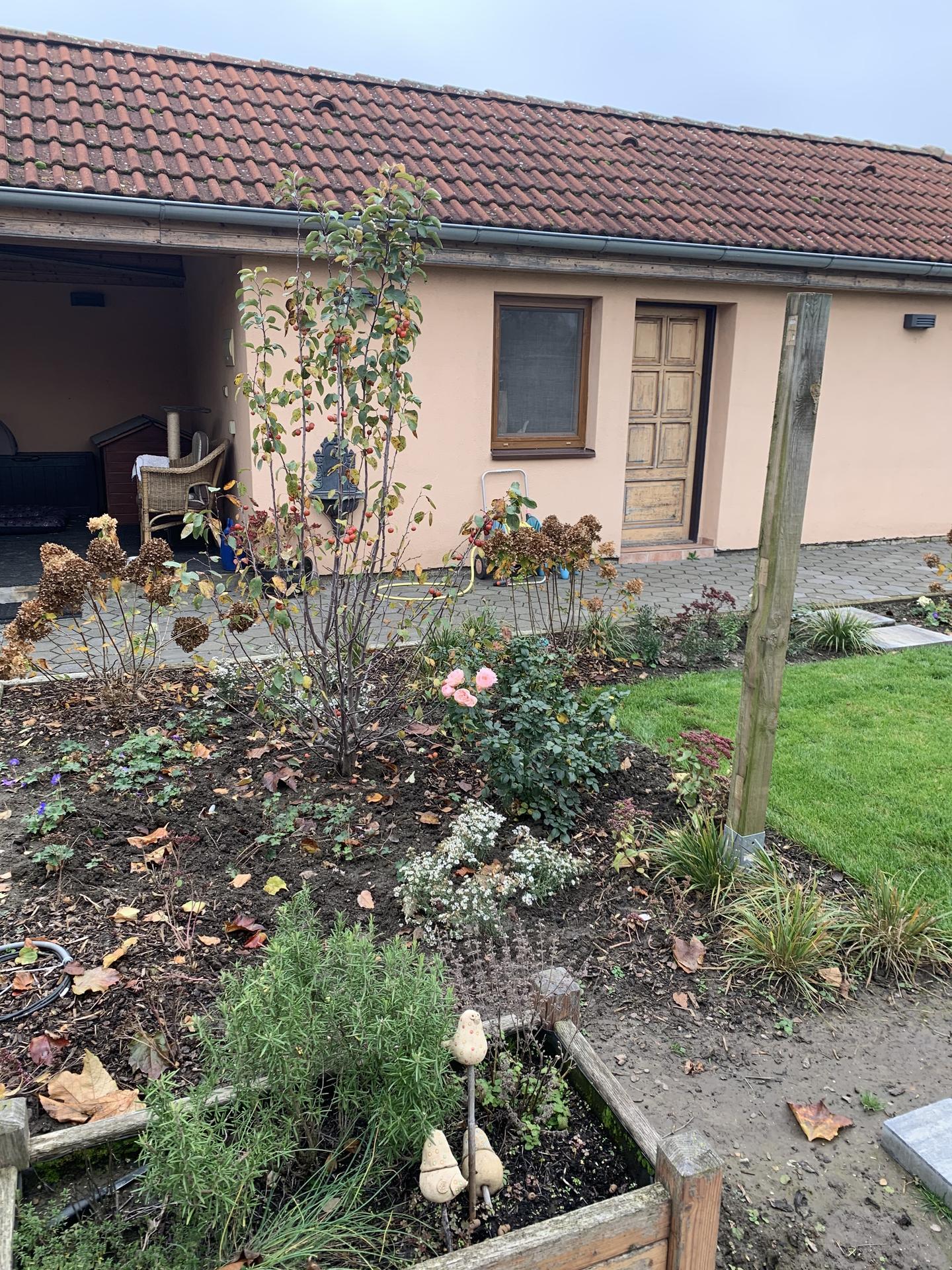 (staro) nová záhrada - Obrázok č. 105