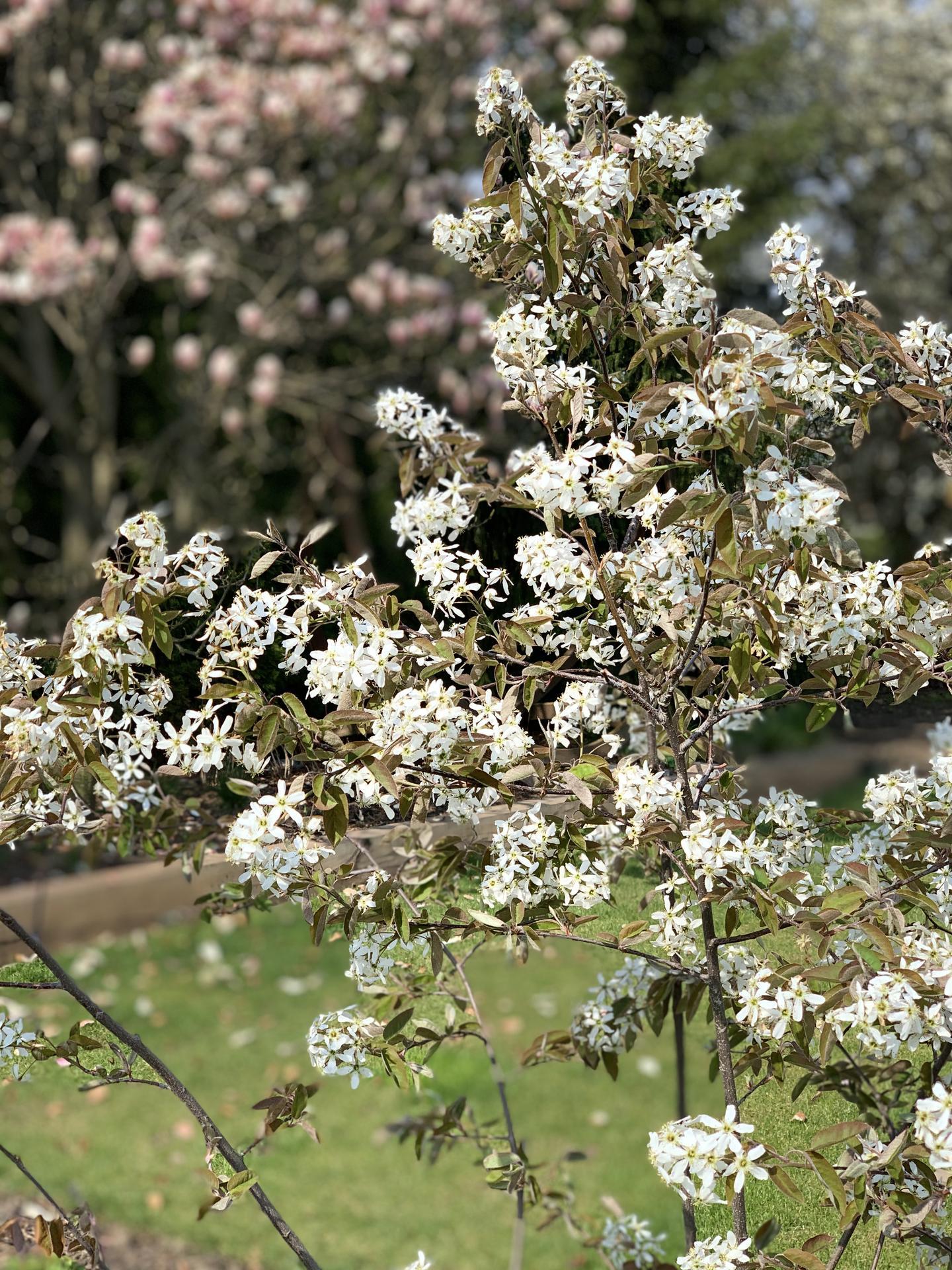 (staro) nová záhrada - Obrázok č. 141