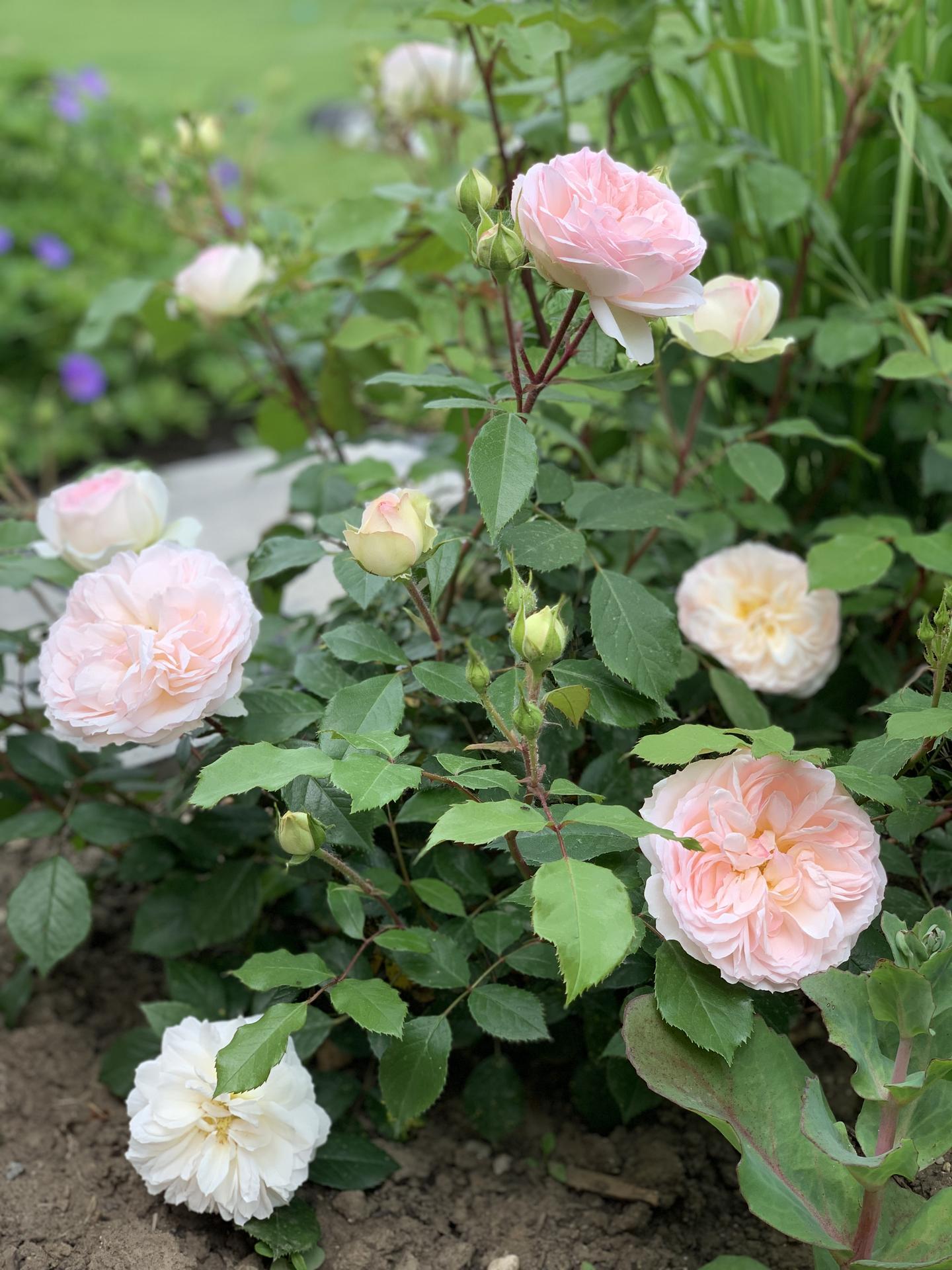 (staro) nová záhrada - Obrázok č. 212