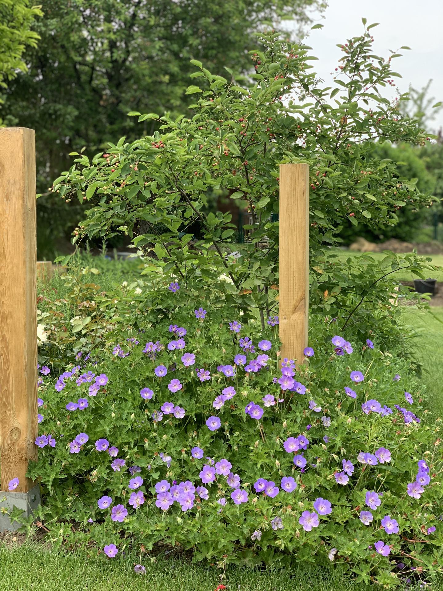 (staro) nová záhrada - Obrázok č. 214
