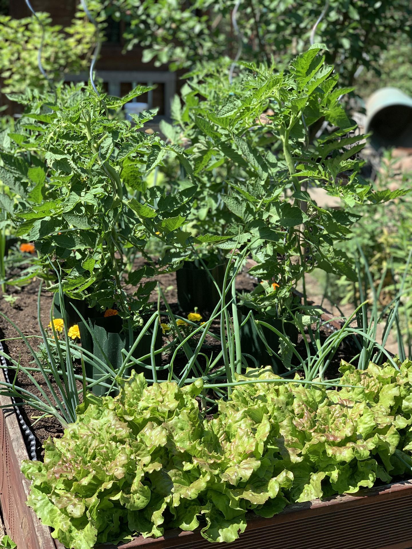 (staro) nová záhrada - Obrázok č. 222