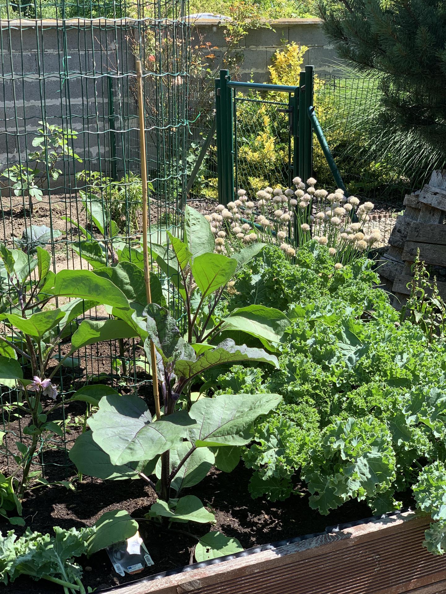 (staro) nová záhrada - Obrázok č. 223