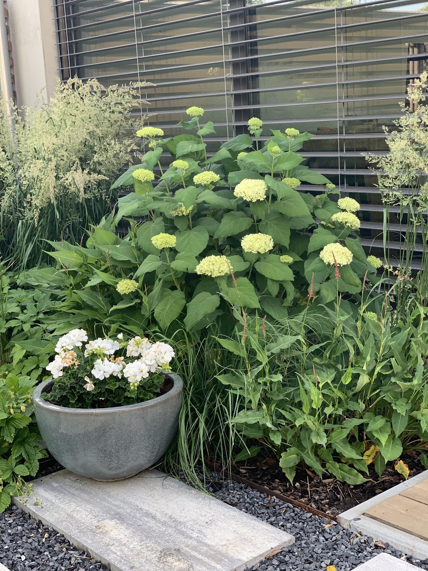 (staro) nová záhrada - Obrázok č. 230