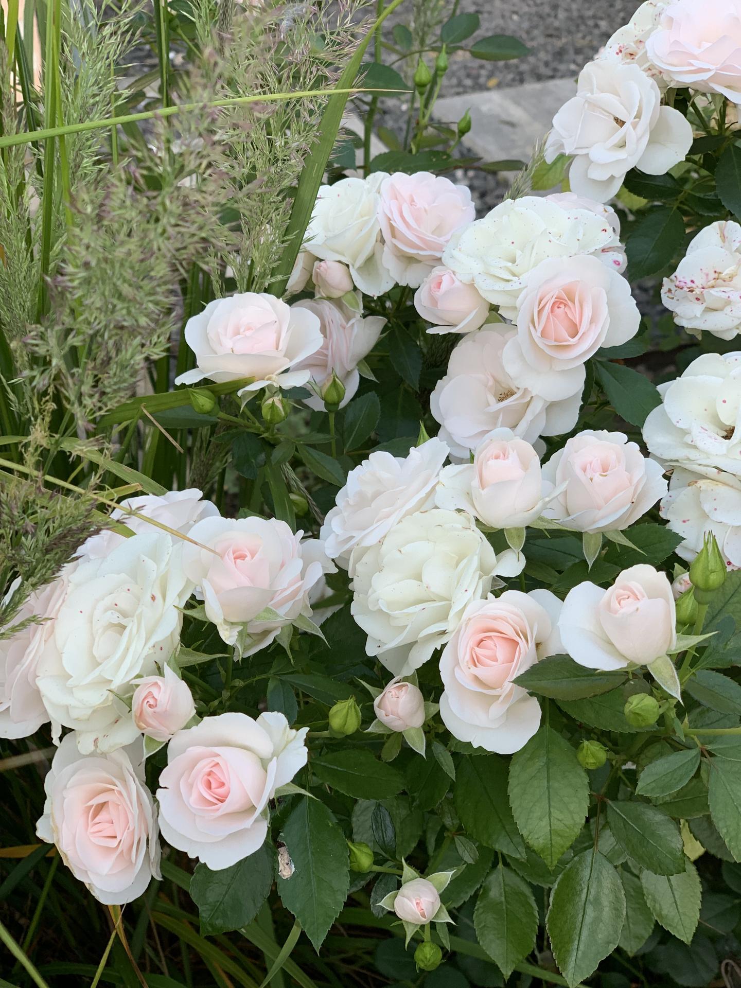 (staro) nová záhrada - Obrázok č. 267