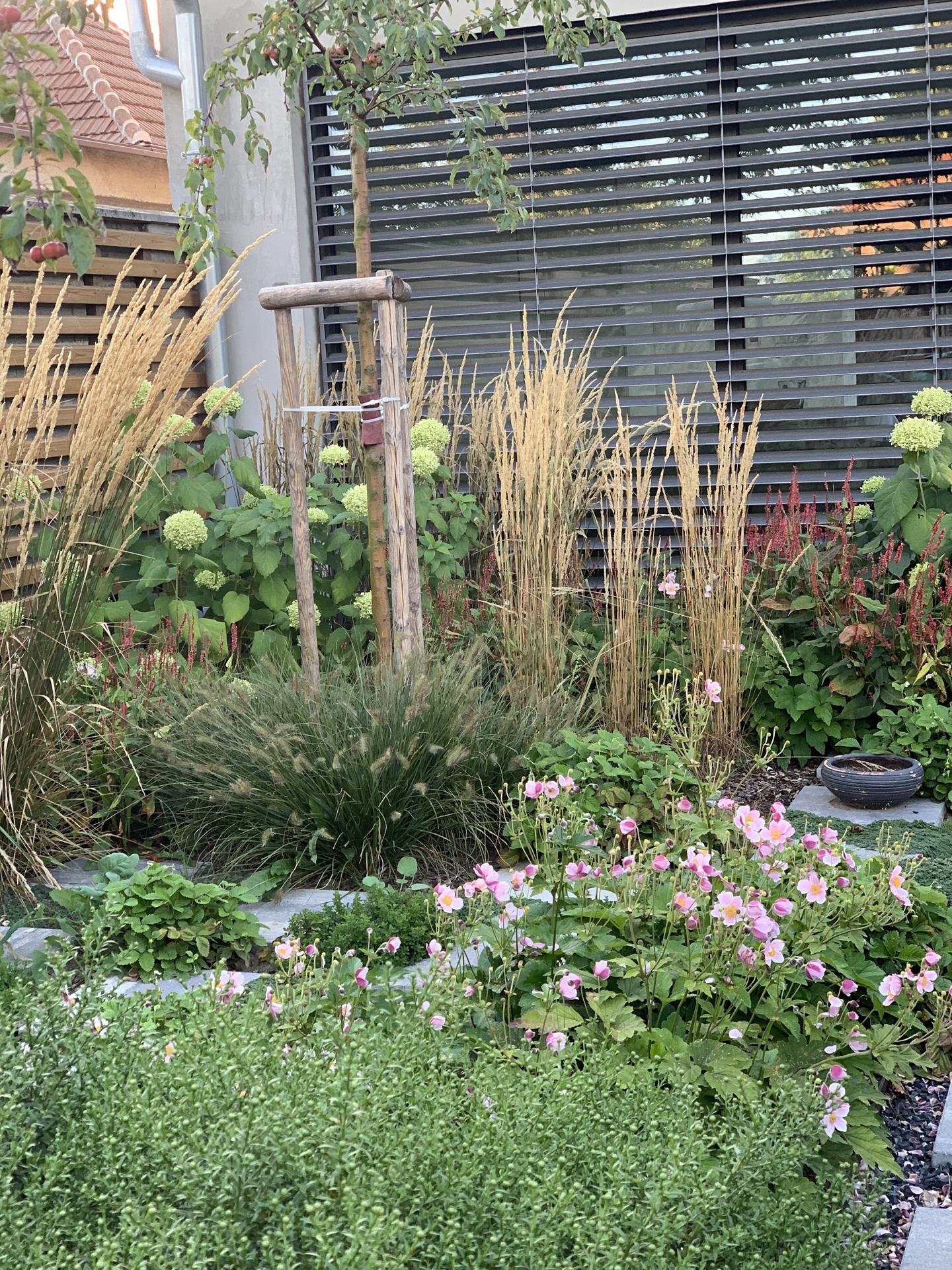 (staro) nová záhrada - Obrázok č. 265