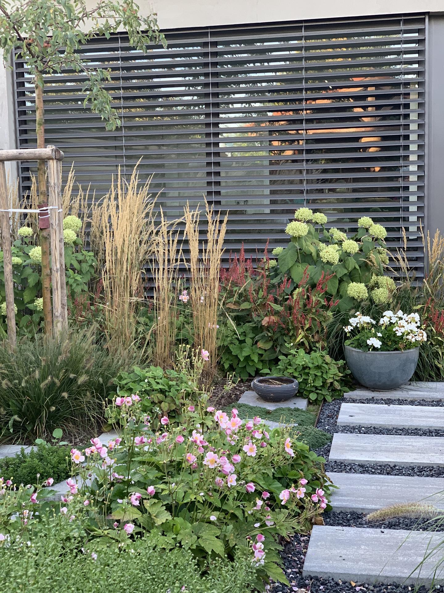 (staro) nová záhrada - Obrázok č. 266