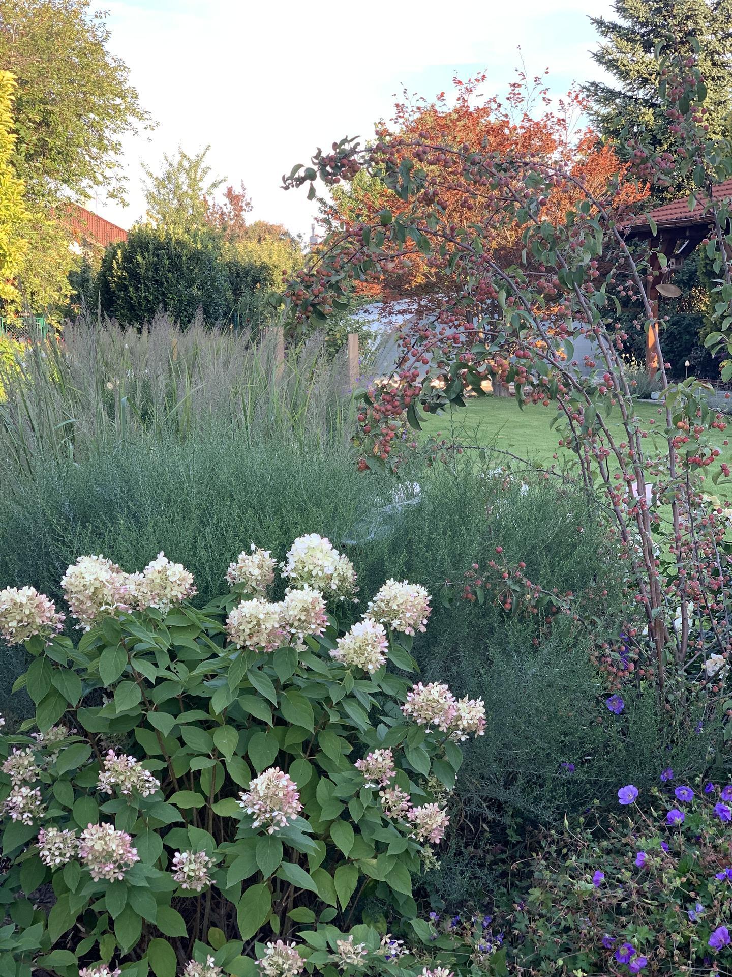 (staro) nová záhrada - Obrázok č. 272
