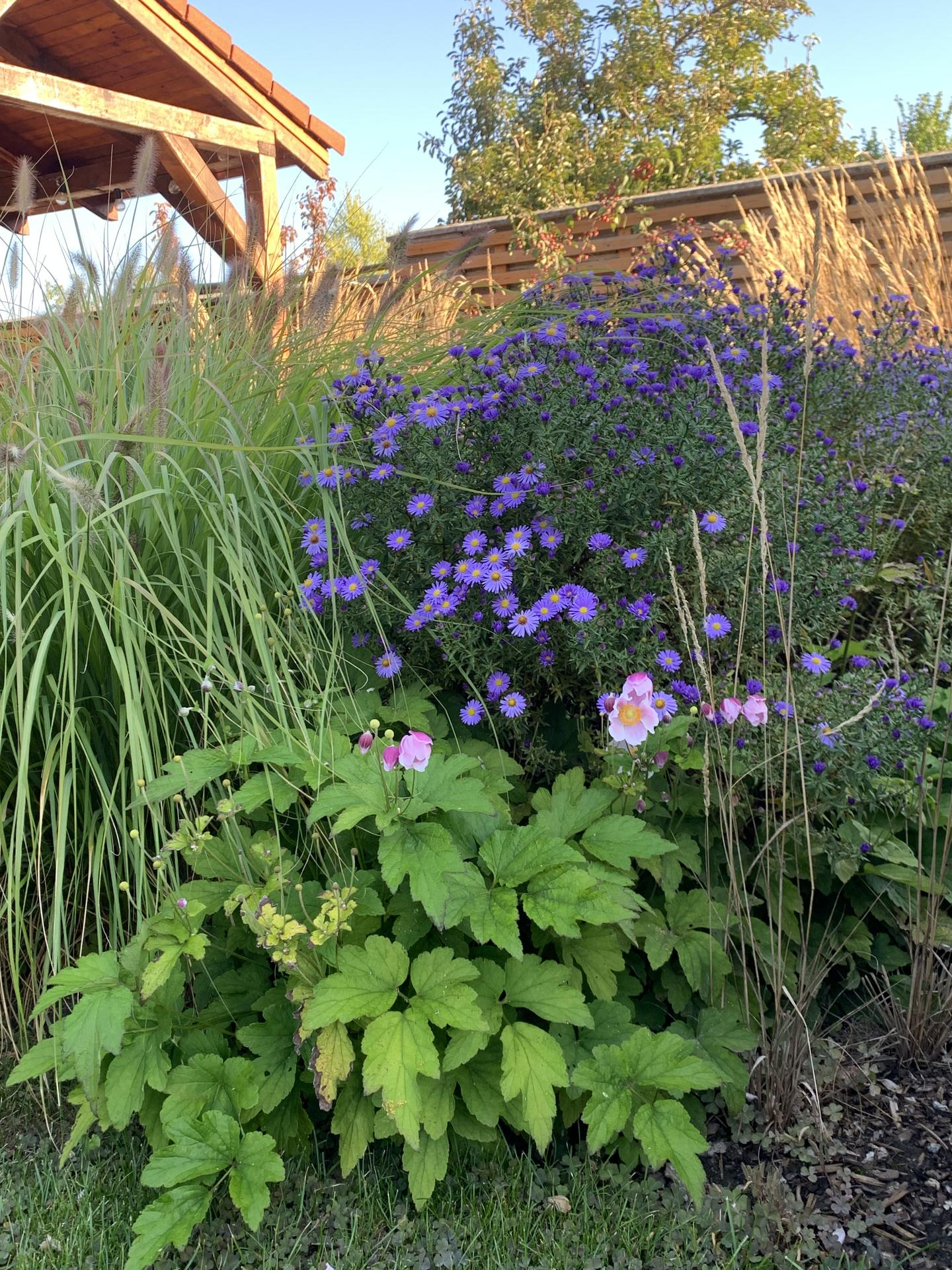 (staro) nová záhrada - Obrázok č. 281