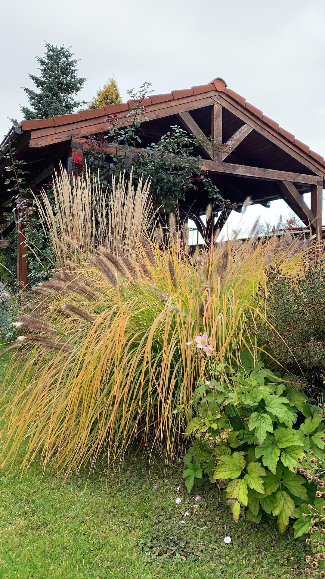 (staro) nová záhrada - Obrázok č. 297