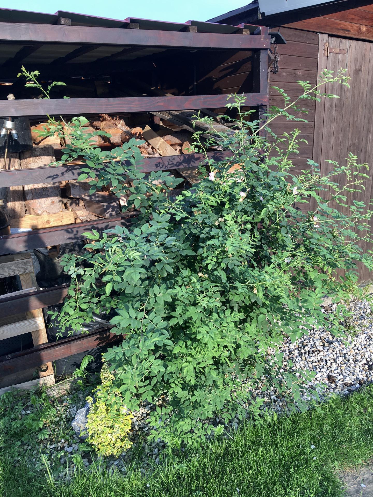 Za plotem - Obrázek č. 84
