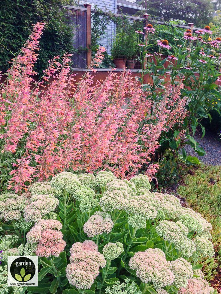 Zahrada inspirace - Obrázek č. 31