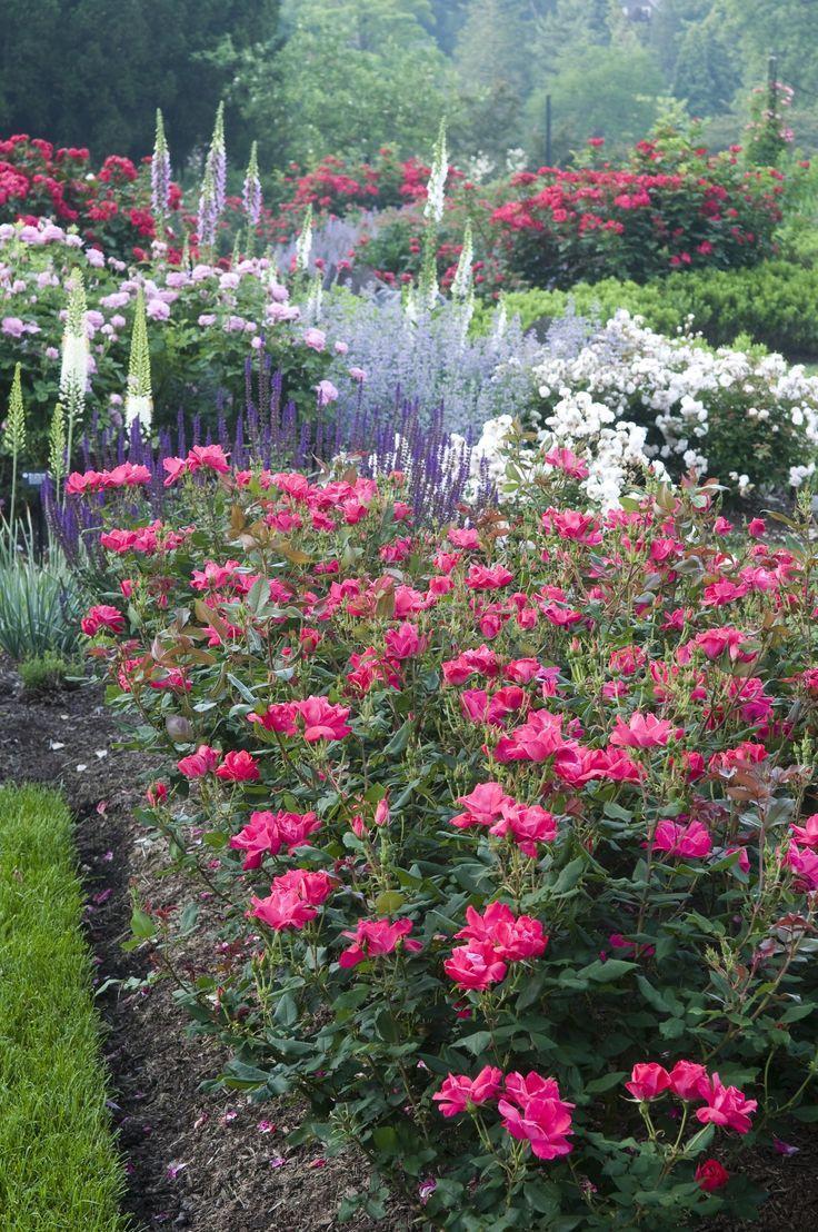 Zahrada inspirace - Obrázek č. 32