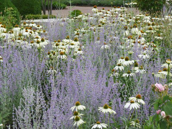 Zahrada inspirace - Obrázek č. 39