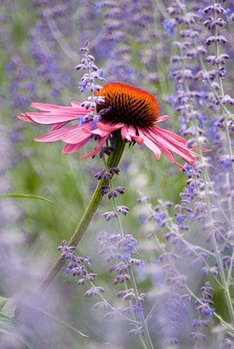 Zahrada inspirace - Obrázek č. 41