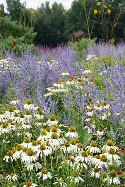 Zahrada inspirace - Obrázek č. 40